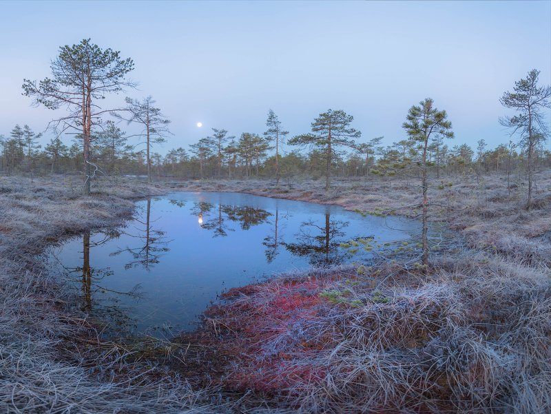 болото, кайф, рассвет ,север ,солнце, свет, весна Закат луны над болотомphoto preview