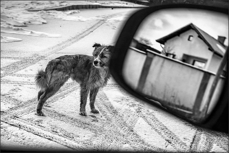 composition, композиция Dog\'s Lifephoto preview