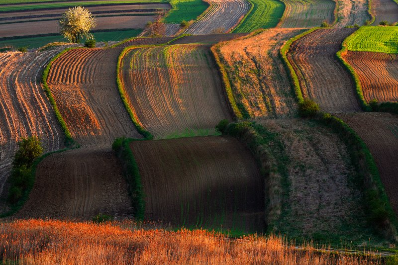 spring, morning, light, field, sunrise, florescence, wave, agriculture Geometry of fieldphoto preview