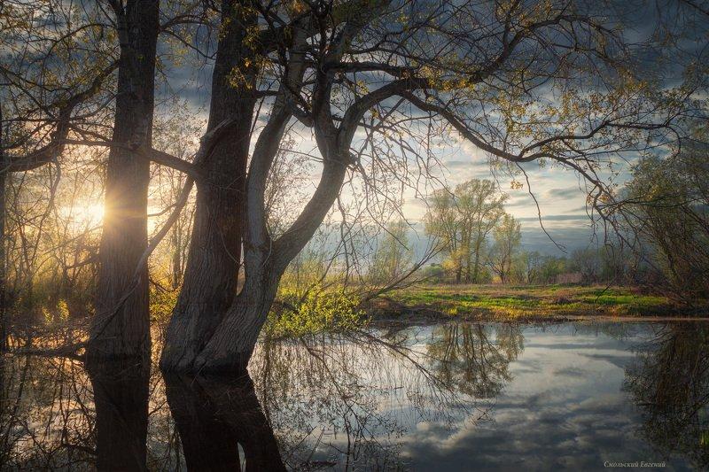 весна, отражение, тополь, вечер, закат, поляна Весенний прудикphoto preview