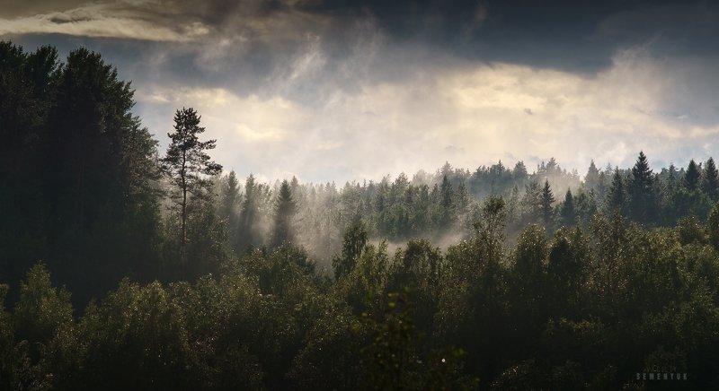 карелия, лето, лес, туман, гроза, клочья тумана, ели, karelia, forest, mist, dramathic sky, storm. Холодное пламя Карелии.photo preview