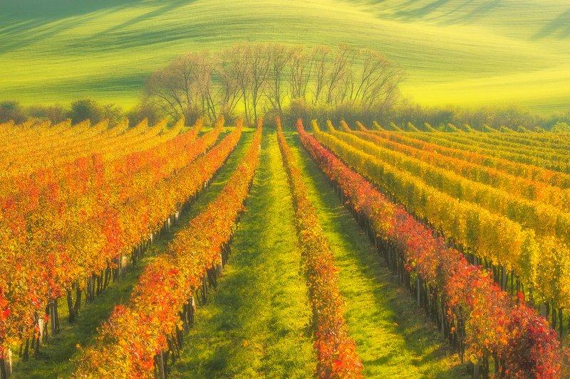 landscape,canon,mist,light,autumn,moravia Moravian Vineyards....photo preview