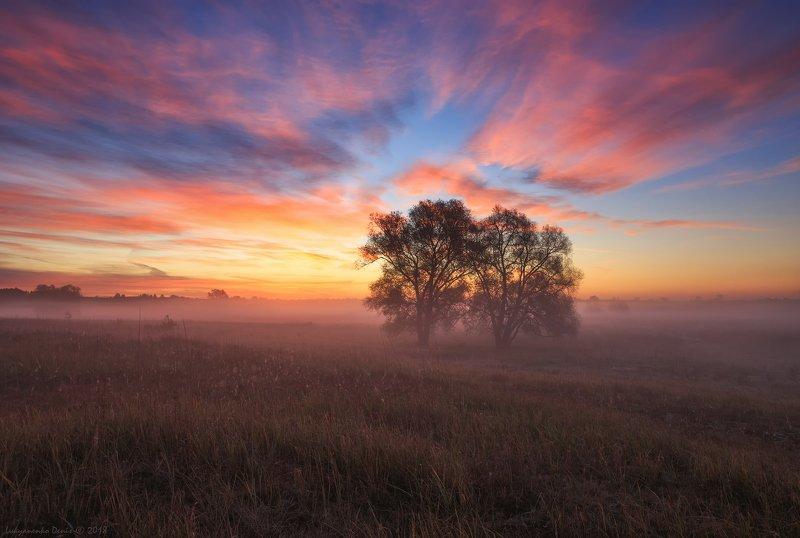 2018, россия, пейзаж, утро, рассвет, туман, облака, деревья, небо, краски, трава В объятьях розовых сновphoto preview