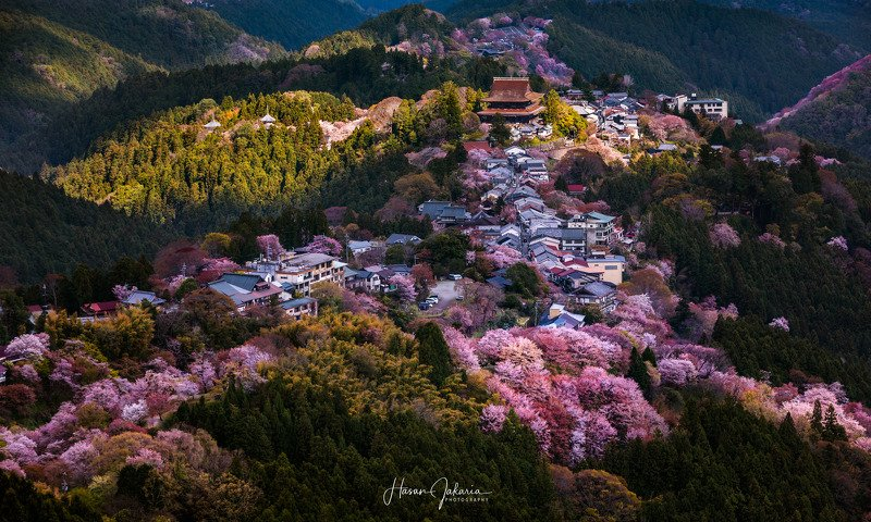 cherry blossom nature mountain morning sakura landscape japan nara Magical Lightphoto preview