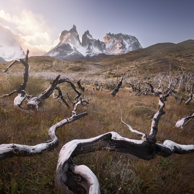 america, andes, beautiful, black, blue, branch, chile, clouds, cuernos, curved, dark, dead, del, dry, forest, glacier, grass, hiking, hill, ice, landmark, landscape, light, log, morning, moss, mountain, national, nature, outdoor, paine, park, patagonia, p The Thorny Way фото превью