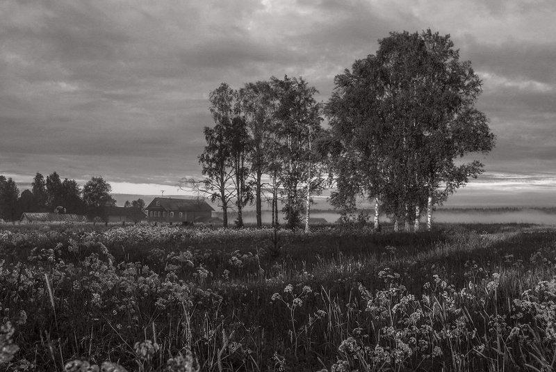 лето утро туман трава деревня берёзы Утроphoto preview