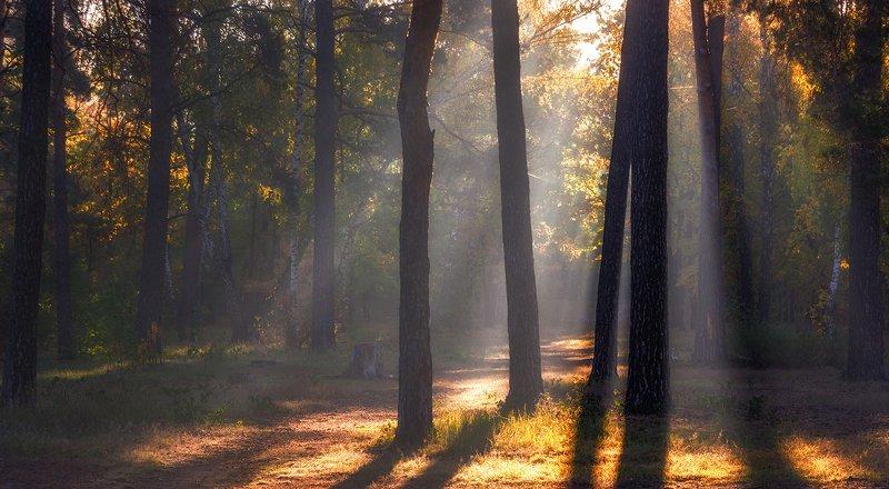 landscape, пейзаж, утро, лес, сосны, деревья, солнечный свет,  солнце, природа, солнечные лучи,  прогулка, солнечное утроphoto preview
