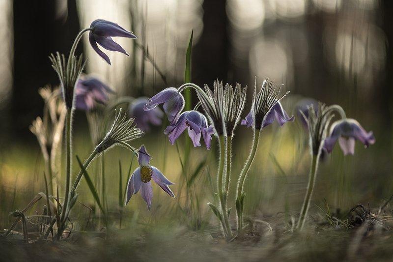 сон трава, свет, цвет, весна, апрель, маклок, воронеж, геннадий мещеряков Мгновения снов...photo preview