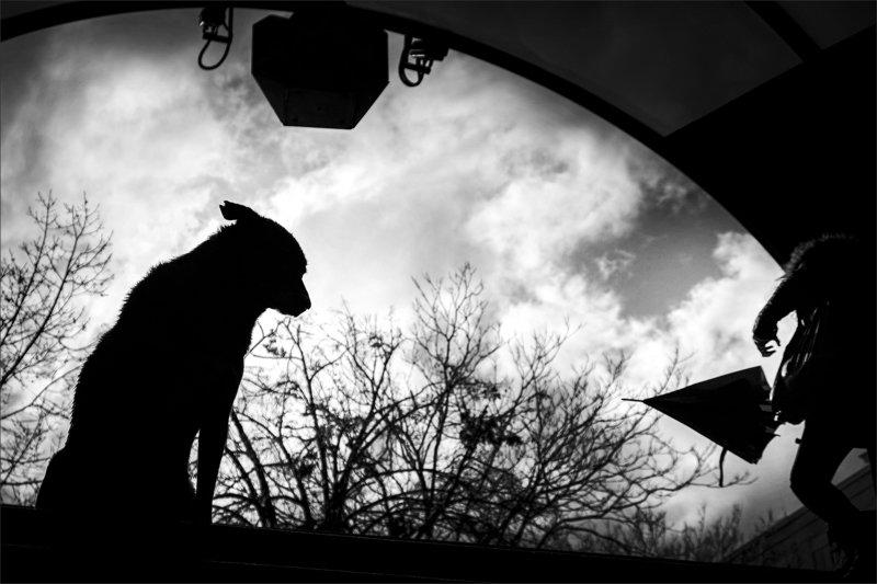 composition, композиция, собака, dog Dog\'s Lifephoto preview