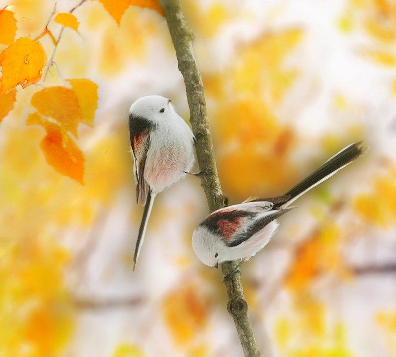 природа, фотоохота,  птицы, животные, осень Птицы и осень 4photo preview