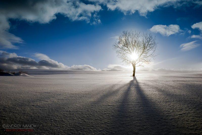 пейзаж природа зима закат подмосковье яхрома В оковах дерева...photo preview