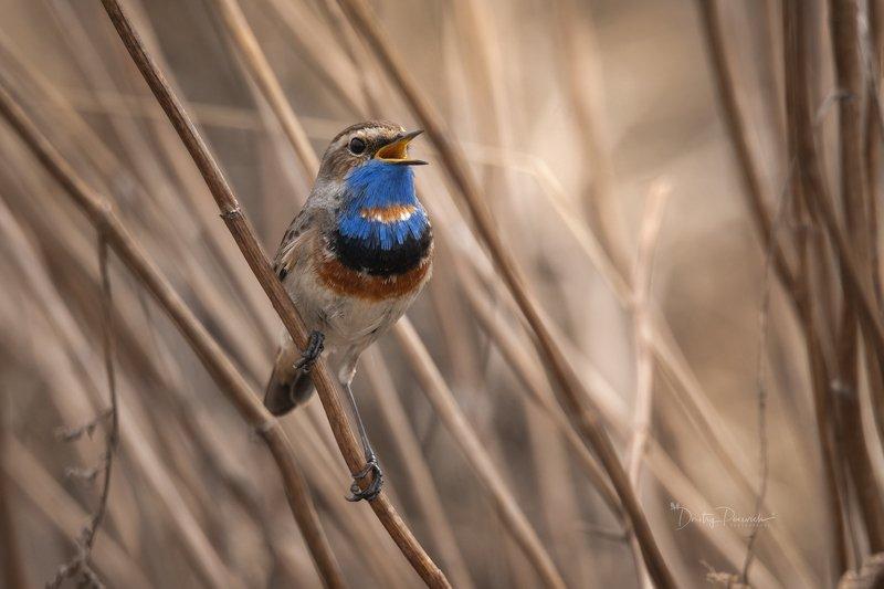 природа, лес, животные, птицы Солист прилетел :) фото превью