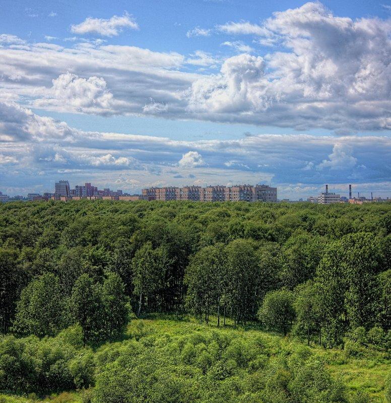 деревья, зелень, небо, облака between heaven and earthphoto preview
