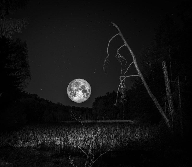 moon, forest, sky, nature, landscape, night, star, light, atmosphere, nikon, springtime, marshland,  Sleeplessnessphoto preview