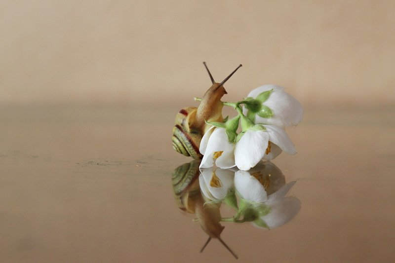 улитка ,  цветок, жасмин, весна в танце с веснойphoto preview