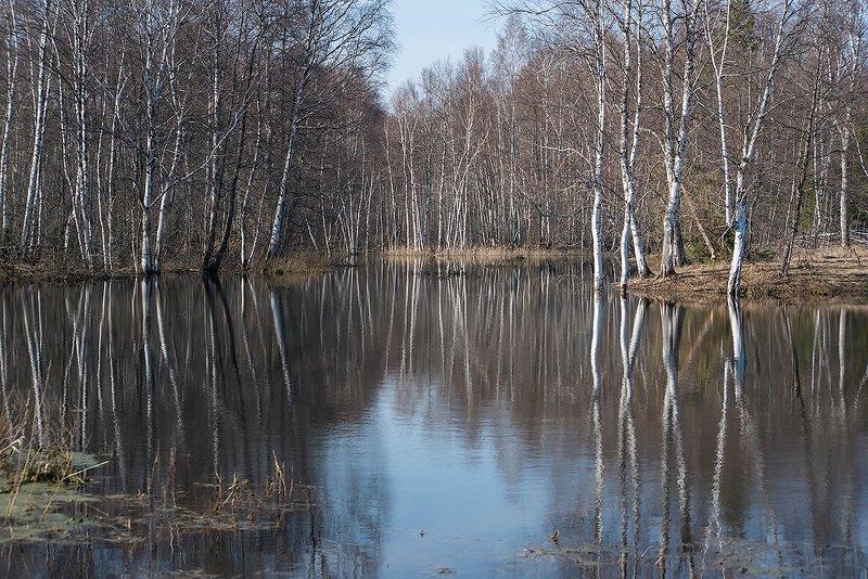берёзы, весна, ритмы, отражения, берёзовый ситец, мещёра, рязанская область Весна в стране берёзового ситцаphoto preview