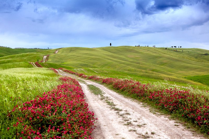 italy, tuscany, landscape, spring Road of Tuscanyphoto preview