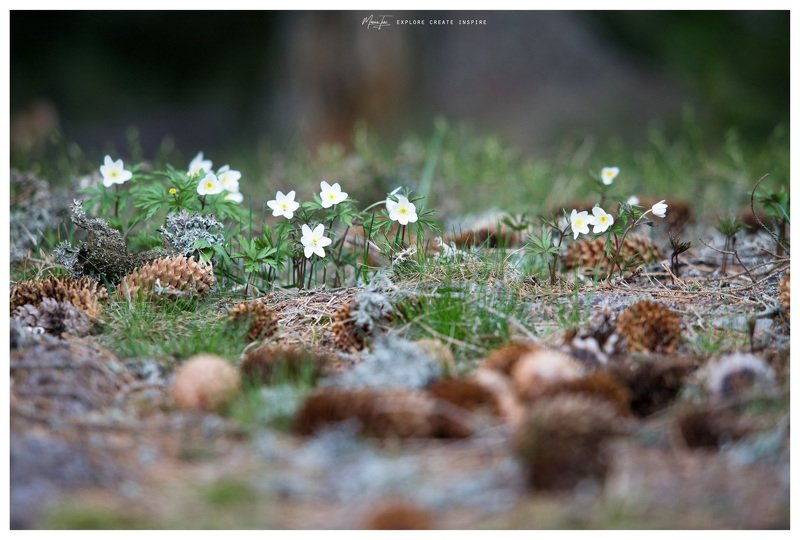 flowers,evening,nature,romania,silence Waitingphoto preview