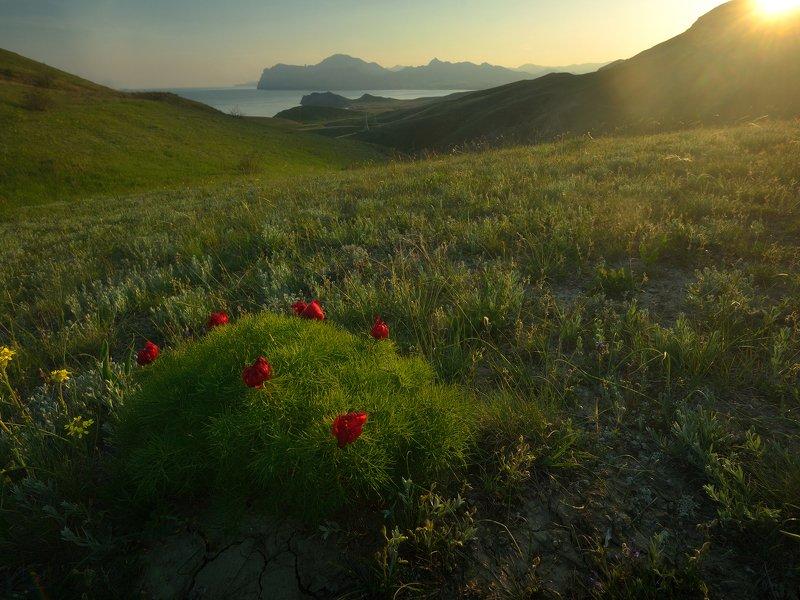 крым, природа, весна, горы, закат, закатное солнце, цветы Горные пионыphoto preview