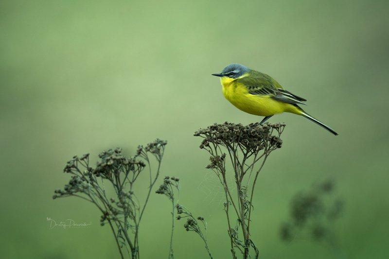 природа, лес, животные, птицы Желтое настроение :) фото превью