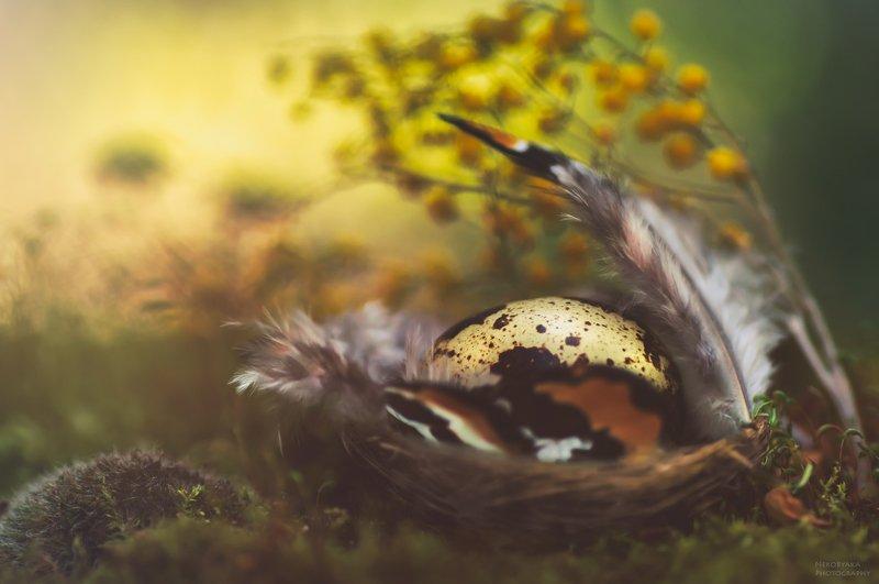 цветы, мох, мимоза, перья, яйцо, перепелка, боке, натюрморт, flowers, moss, mimosa, feathers, egg, quail, bokeh, still life, ***photo preview