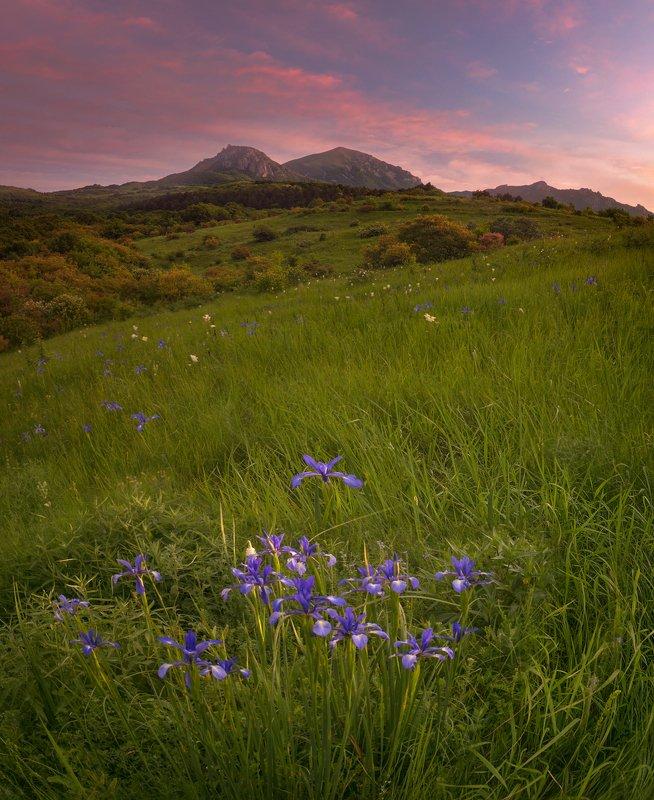 ирисы, дикие, рассвет, бештау,пейзаж По диким ирисам к рассветуphoto preview