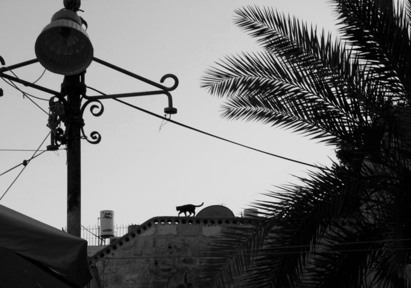 Black and white, Monochrome, Street, Jerusalem, Israel Teaser on the catwalkphoto preview