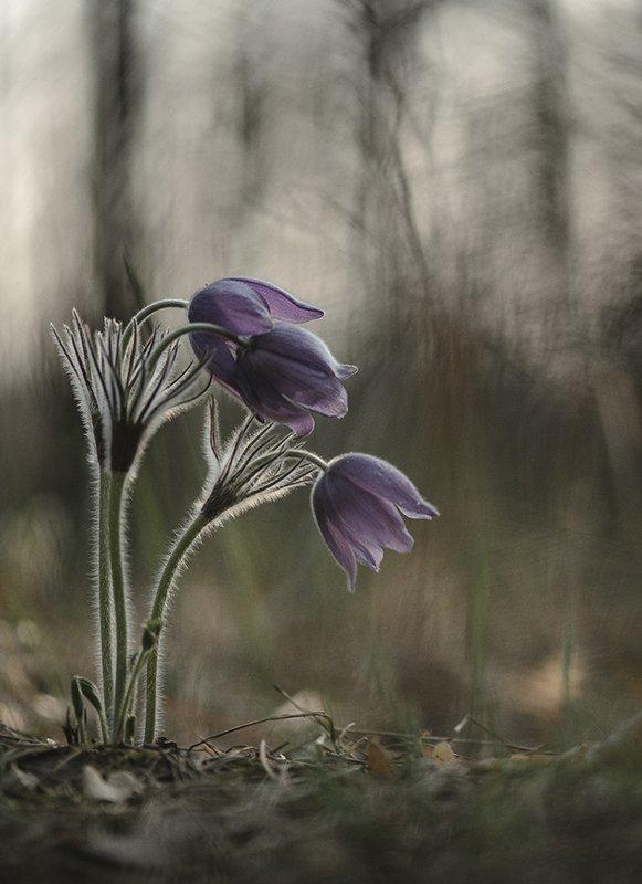 сон трава, свет, цвет, весна, апрель, маклок, воронеж, геннадий мещеряков Время снов...photo preview