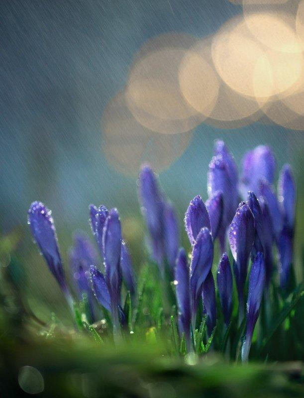 макро, природа, капля, вода, цветы, весна, красота, волшебство под дождиком...photo preview