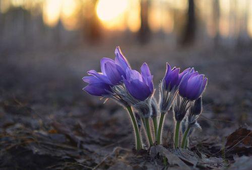Сны весеннего леса