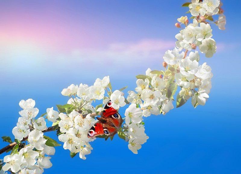 природа, яблоня, весна, бабочка, май С Праздником Весны!!!photo preview