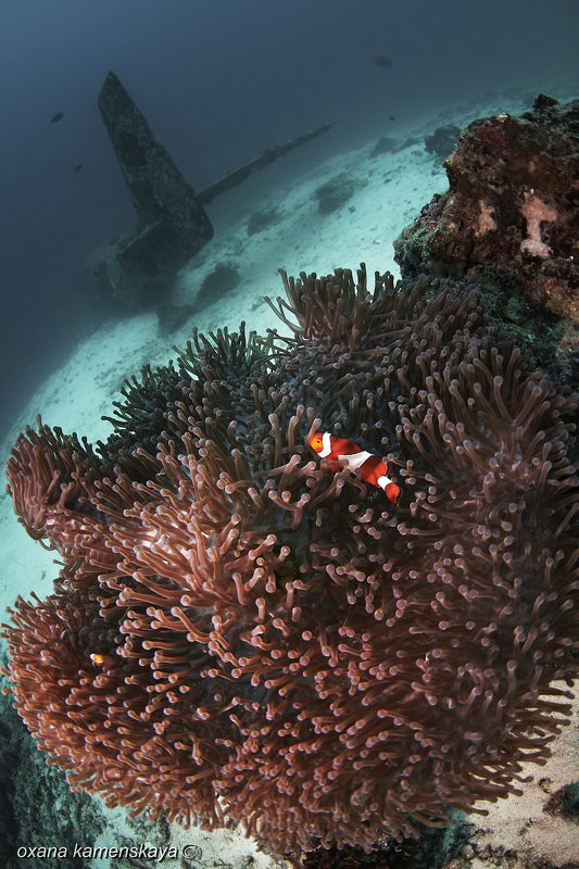 underwater phillipines blue deep diver wreck aircraft airplane anemone amphiprione Пора в отпуск...photo preview