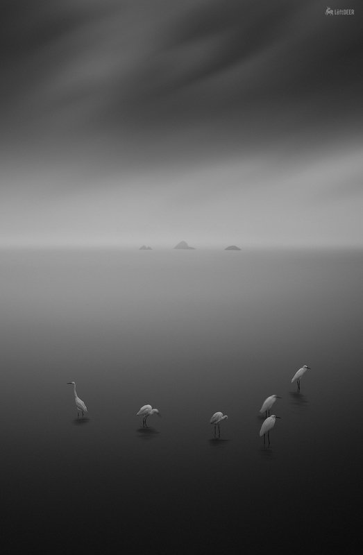 black & white,landscapes,reef,sea,travel,light and shadow,wenzhou,china,ecology,heron,bird East Sea Heronphoto preview