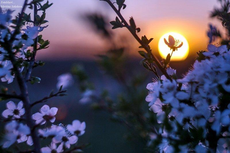 Про закат.photo preview