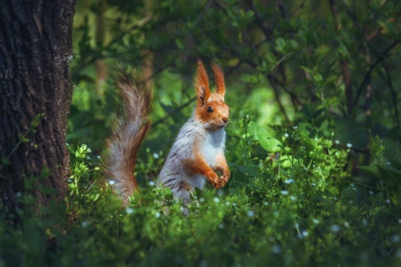 moment, момент, beautiful, красивый,  nature, природа, canon 55-250,  animal, животное,  forest, лесное, red, рыжая, squirrel, белка,  greenery, зелень,  spring, весенняя, joy, радость, Радуясь весеннему солнышку! :)photo preview