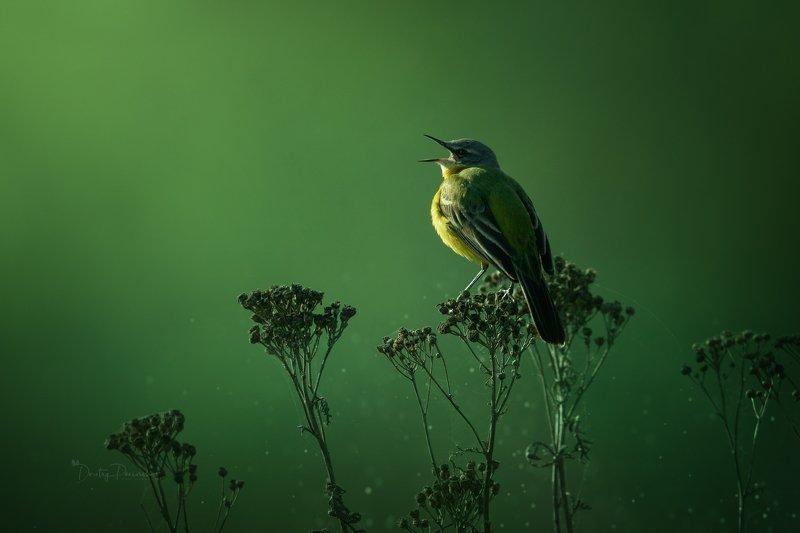 природа, лес, животные, птицы Утренняя фото превью