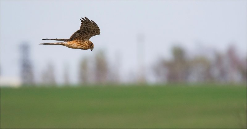 птица хищник Hunterphoto preview