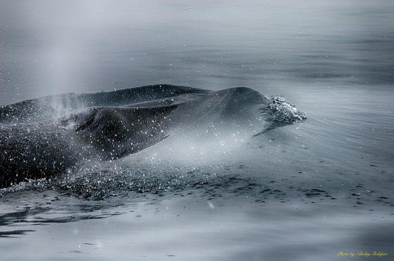 Антарктида 55photo preview