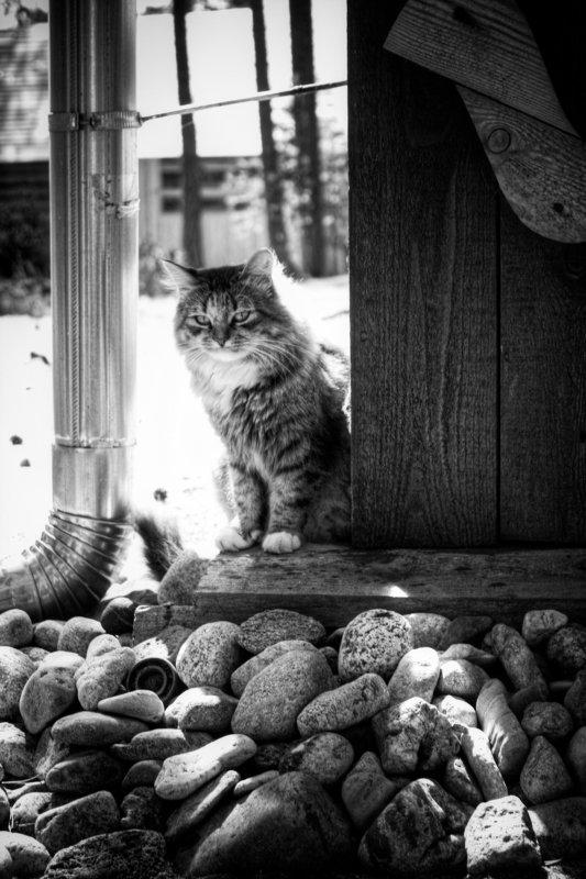 кот, кошка, животное, cat, коты, кошки thinkingphoto preview