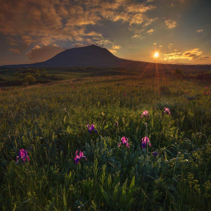 закат,май ирисы,весна,пейзаж Про дикие ирисы на закатеphoto preview