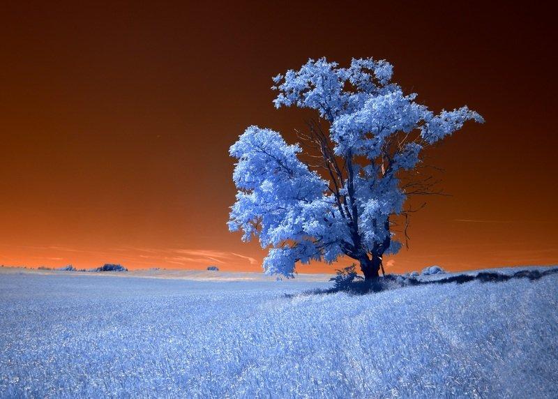 infrared,ик-фото,инфракрасное фото, инфракрасная фотография, пейзаж, лето, беларусь Оранжевое небо.photo preview