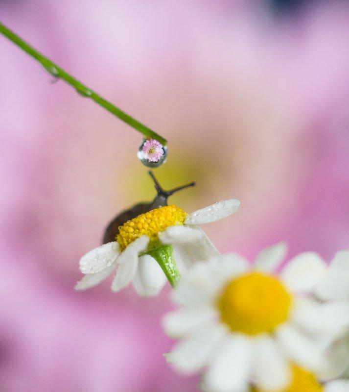 макро, улитки, природа, капля, вода, цветы, лето, весна, макро истории, красота, волшебство Утренние процедуры :)photo preview