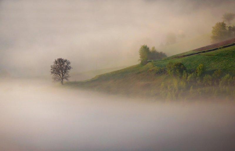 mountain, spring, landscape, travel, nature, romania, colors, holbav, fog, tree, light, sunrise The Fog Crackerphoto preview