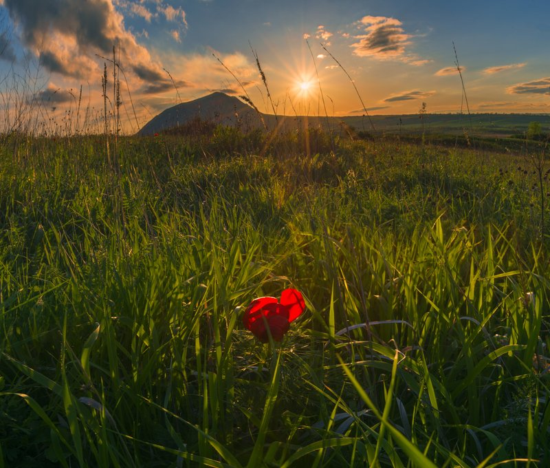 весна,закат,трава,цветок Аленький цветочекphoto preview