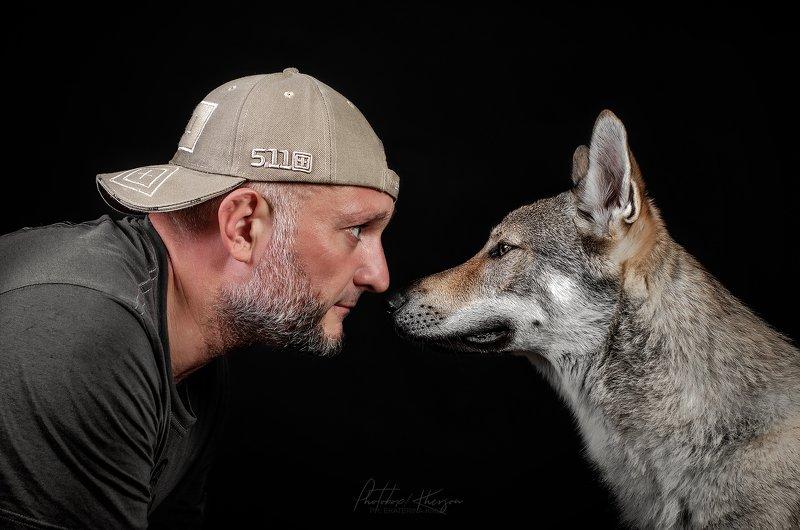 собака, анималистика, портрет, студия Brutalityphoto preview