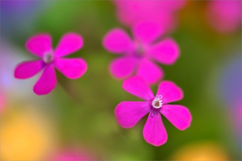 цветы, флора, весна, макро Spring multicolorphoto preview