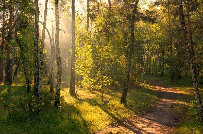 landscape, пейзаж, утро, лес,  деревья, солнечный свет,  солнце, природа, солнечные лучи,  прогулка, тропинка утроphoto preview