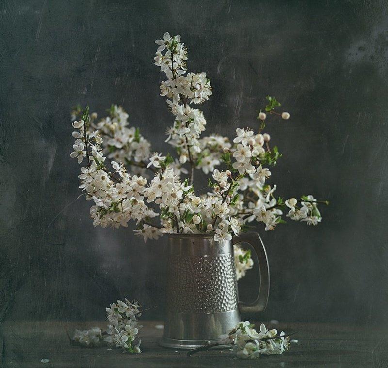martwa natura z kwiatem wiśniphoto preview