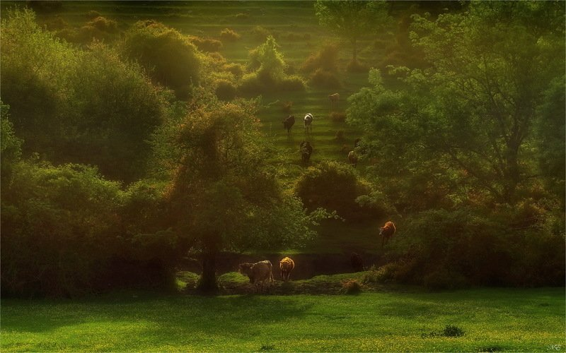 горы вечер коровы Домойphoto preview