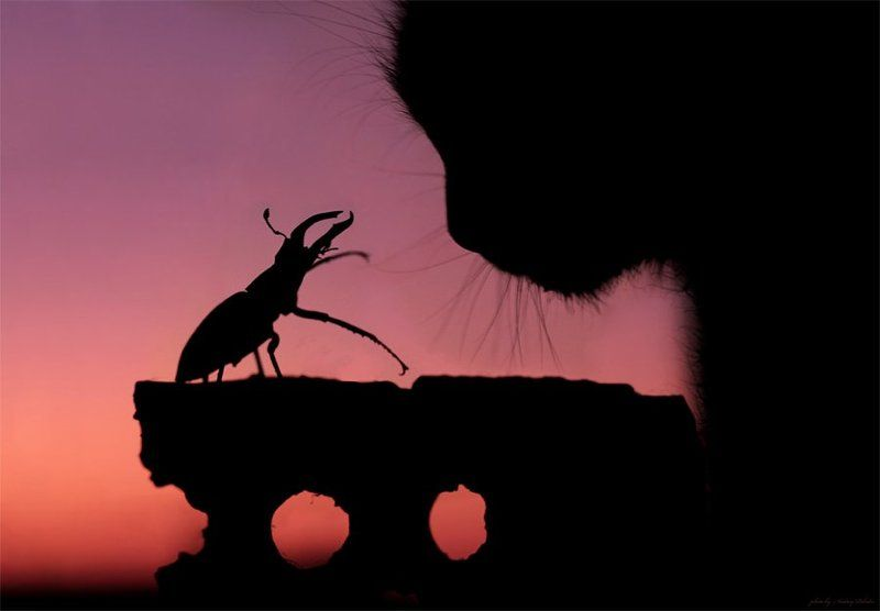 кошка, жук, закат, кирпич Разговорphoto preview